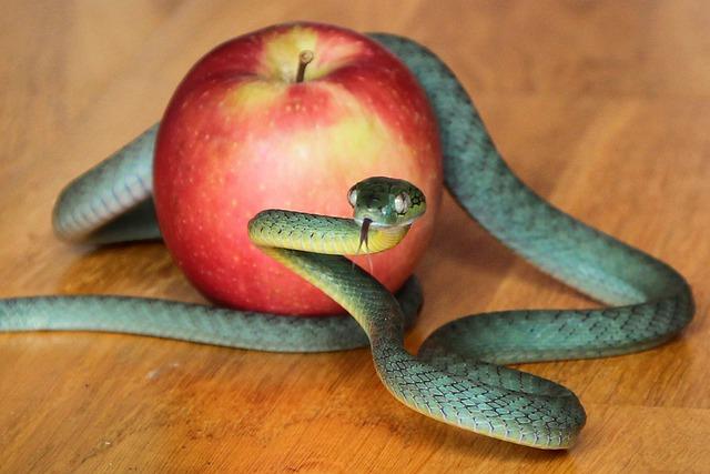 snake-4999980_640.jpg